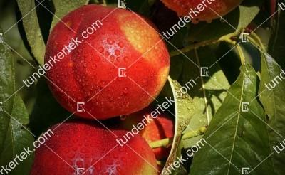 Venus nektarin