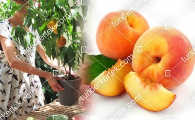 Fruit me: Peach me yellow
