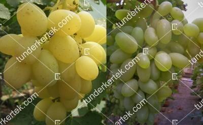Bélij gigant csemegeszőlő