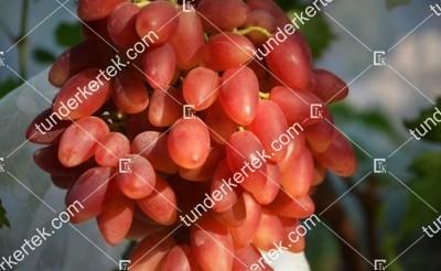 Dubovszkij Rozovüj csemegeszőlő