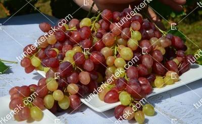 Kismis velesz csemegeszőlő