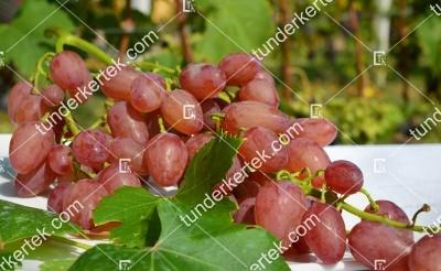 Kismis lucsisztij csemegeszőlő