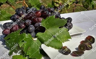 Velika csemegeszőlő