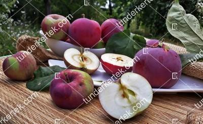Éva-szerű lila alma