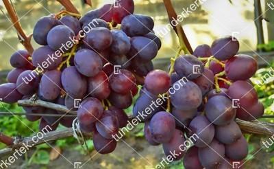Armani csemegeszőlő