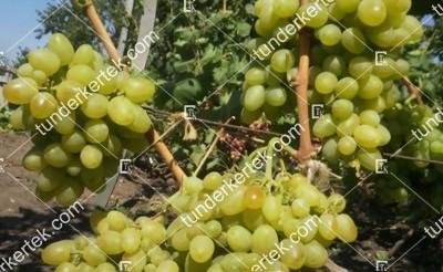 Bazsena csemegeszőlő
