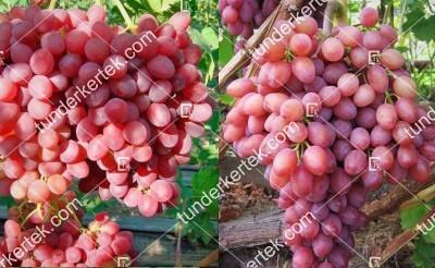 Krásznoje plamja csemegeszőlő
