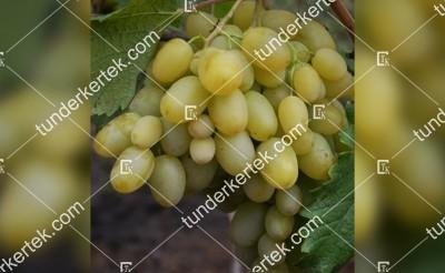 Muszkat poszada csemegeszőlő