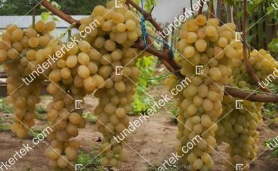 Valentina csemegeszőlő