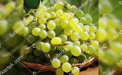 Superior seedless csemegeszőlő