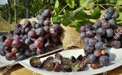 Melinda csemegeszőlő