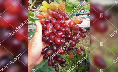 Rizamat csemegeszőlő