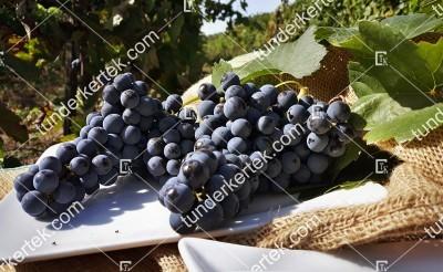 Kékfankos szőlő
