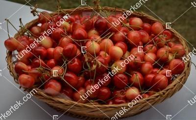Tarka cseresznye