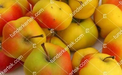 Csillagápi alma