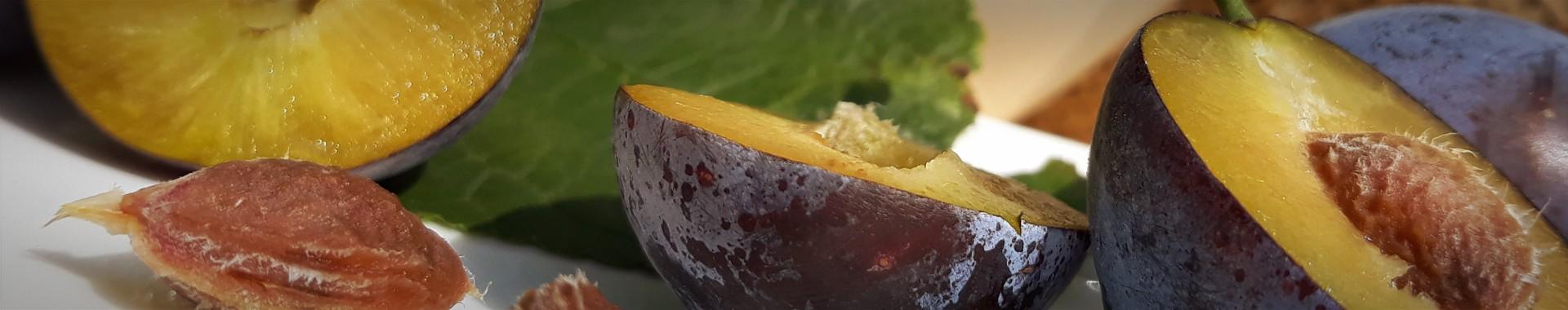 Tündérkertek gyümölcsfa webáruház