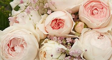 KORDES rózsák