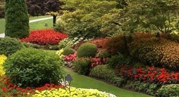 Virágok, dísznövények