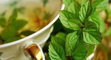 Gyógyhatású növények