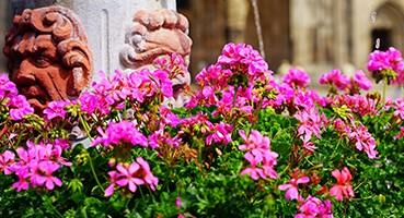 Egynyári és balkonnövények