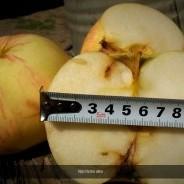 Nyári fontos alma