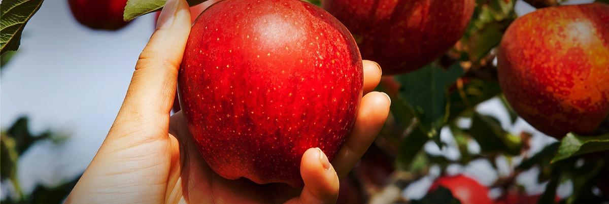 Csak a jó gyümölcsöt érdemes fogyasztani