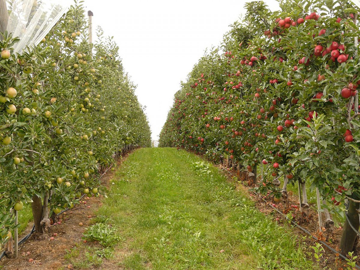 Kárpát-medencei Gyümölcsész Hálózat (KmGyH)  országos találkozó