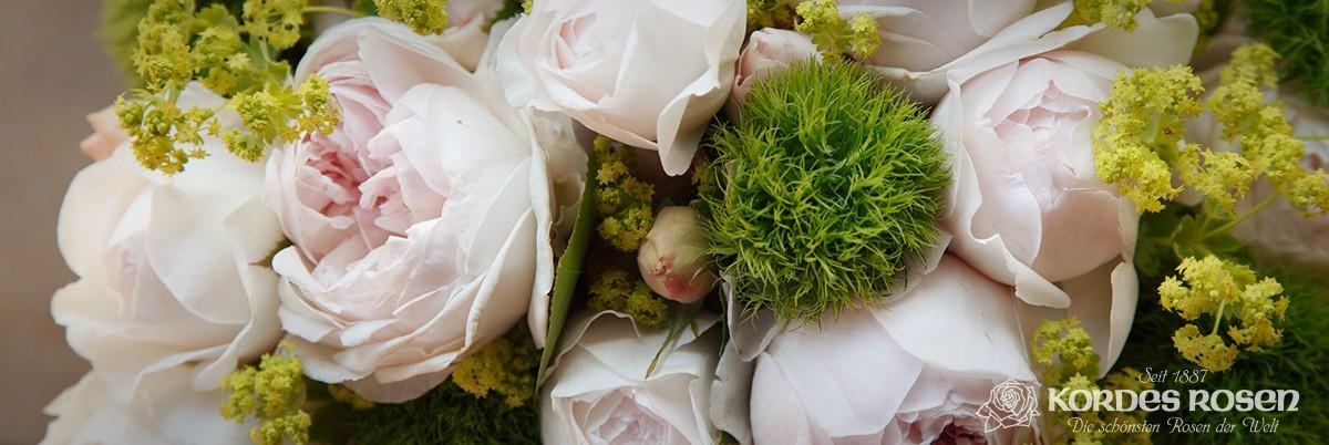 Eredeti KORDES rózsák a kínálatunkban!
