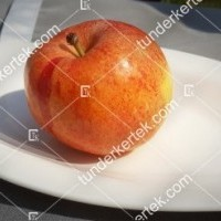 termek136/fahej-alma-136-108779636-1200.jpg / Fahéj alma