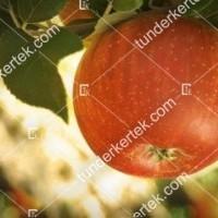 termek164/teli-arany-parmen-164-1747776959-1200.jpg / Téli arany pármen