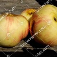 termek196/fontos-alma-mm106-196-1166073139-1200.jpg / Nyári fontos alma
