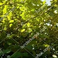 termek196/fontos-alma-mm106-196-1388981446-1200.jpg / Nyári fontos alma