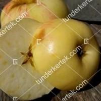termek196/fontos-alma-mm106-196-1504559774-1200.jpg / Nyári fontos alma