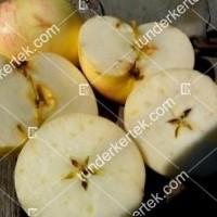 termek196/fontos-alma-mm106-196-1905072562-1200.jpg / Nyári fontos alma