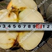 termek196/fontos-alma-mm106-196-1945179919-1200.jpg / Nyári fontos alma