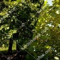 termek196/fontos-alma-mm106-196-536423739-1200.jpg / Nyári fontos alma