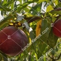 termek201/andosa-nektarin-201-2069739981-1200.jpg / Andosa nektarin