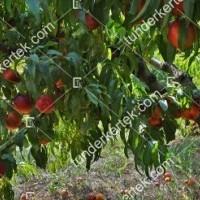 termek202/apolka-nektarin-202-1602919891-1200.jpg / Apolka nektarin