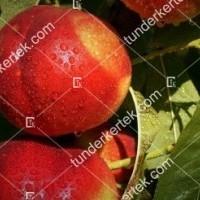 termek2073/venus-nektarin-2073-570744173-1200.jpg / Venus nektarin