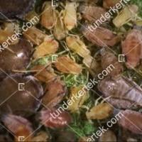 termek2091/levelpirosito-alma-leveltetu-2091-126639159-1200.jpg / Levélpirosító alma-levéltetű