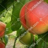 termek212/nektar-h-212-896664500-1200.jpg / Nektár H