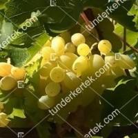 termek2169/centennial-seedless-2169-1350343313-1200.jpg / Centennial seedless
