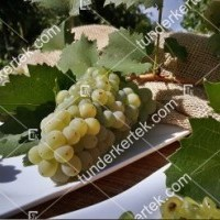 termek2174/olaszrizling-csemegeszolo-2174-1613314007-1200.jpg / Olaszrizling csemegeszőlő