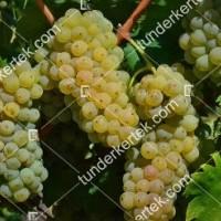 termek2174/olaszrizling-csemegeszolo-2174-1898575453-1200.jpg / Olaszrizling csemegeszőlő
