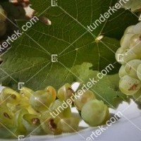 termek2174/olaszrizling-csemegeszolo-2174-471868680-1200.jpg / Olaszrizling csemegeszőlő