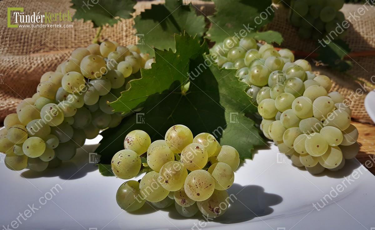 Olaszrizling csemegeszőlő