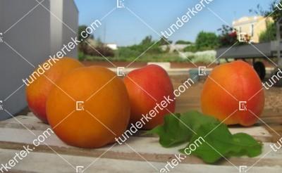Fruit me: Apricot