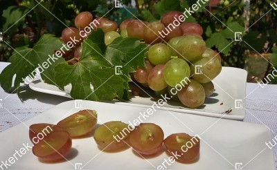 Anjuta csemegeszőlő