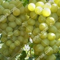 termek2260/antonij-velikij-csemegeszolo-2260-277546934-1200.jpg / Antonij Velikij csemegeszőlő