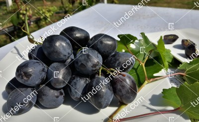 Atosz csemegeszőlő